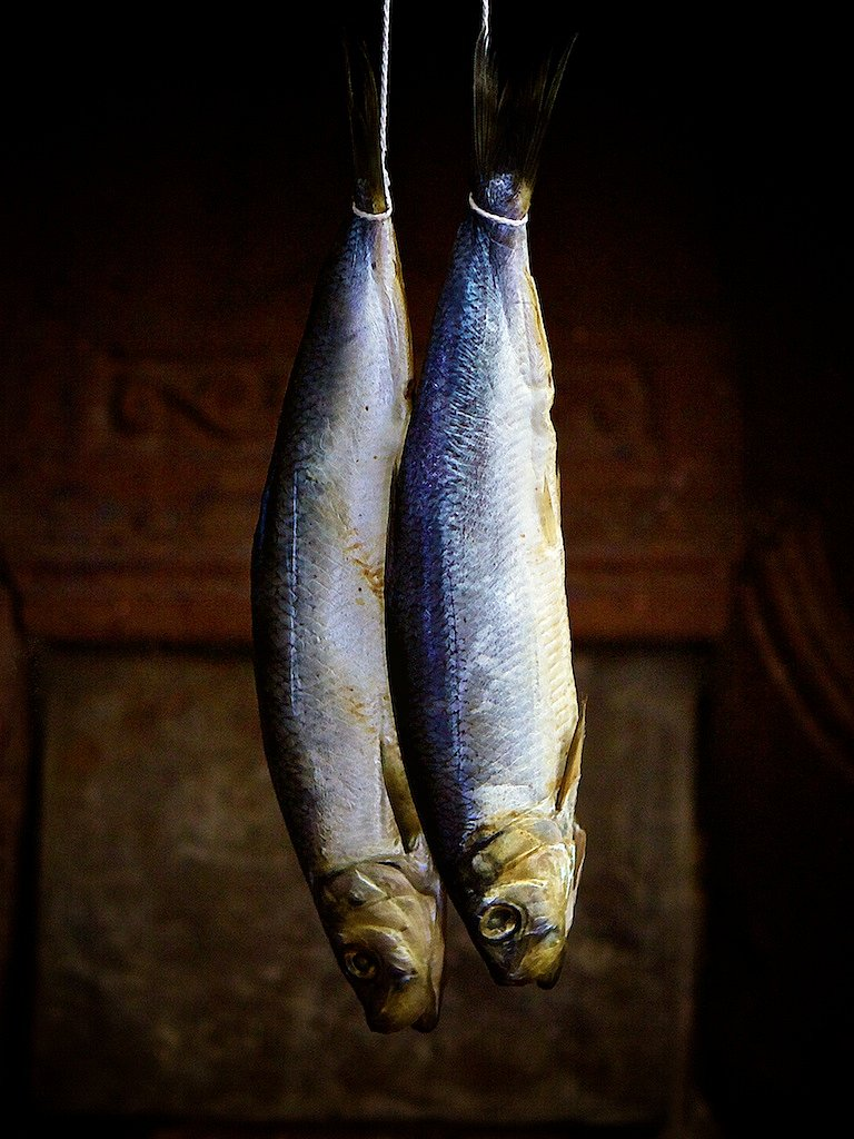 Fish, Suspended