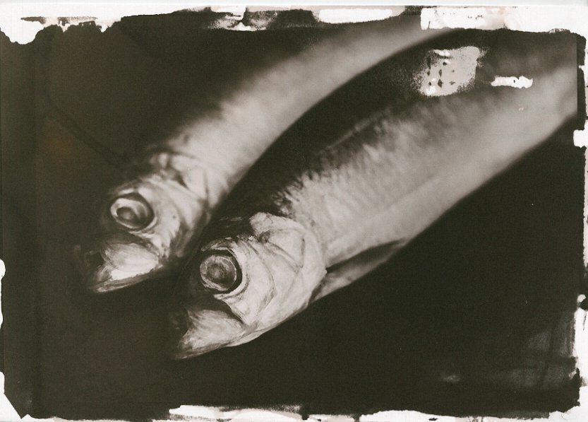 Still Life with Fish salt print